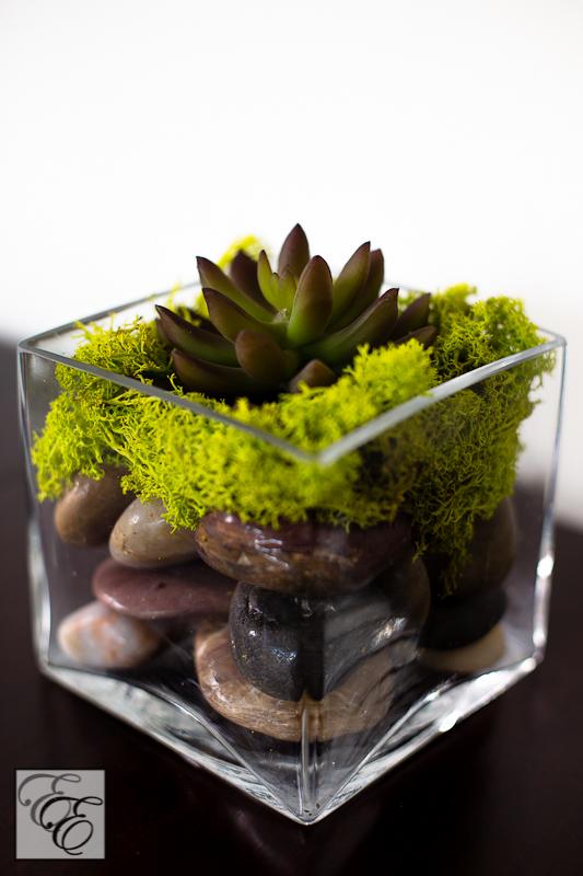 Succulent4